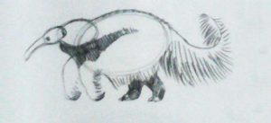draw-anteater03